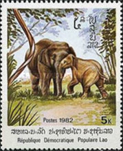 [Indian Elephant, Typ TH]