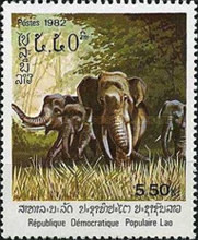 [Indian Elephant, type TI]