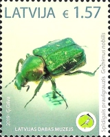 [Unique Exhibits of the Latvian Museum of Nature  - Beetle, Typ AFI]