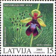 [Protected Plants of Latvia, Typ MU]