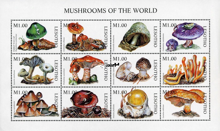 [Mushrooms of the World, Typ ]