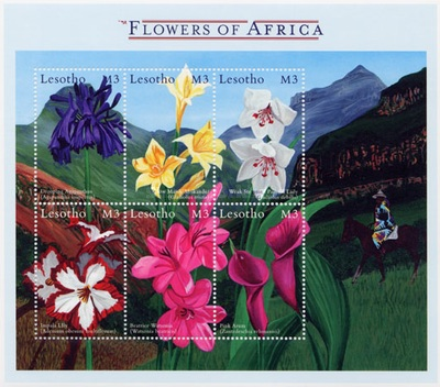 [African Flowers, Typ ]