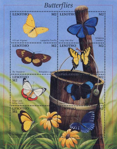 [Butterflies from Around the World, Typ ]