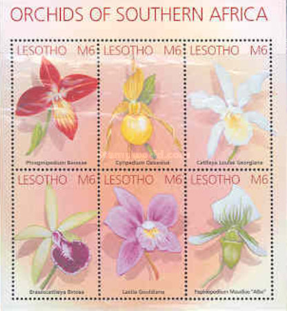 [Orchids of South Africa, Typ ]