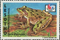 "[International Stamp Exhibition ""PHILAKOREA '94"" - Seoul, Korea - Frogs and Birds, type AOF]"