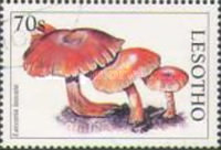 [Mushrooms of the World, Typ AVZ]