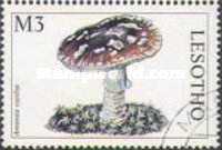 [Mushrooms of the World, Typ AWC]