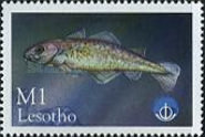[International Year of the Ocean - Fish from Sea and Freshwater, Typ AYS]
