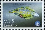 [International Year of the Ocean - Fish from Sea and Freshwater, Typ AYW]