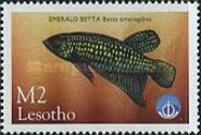 [International Year of the Ocean - Fish from Sea and Freshwater, Typ AYZ]