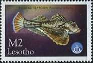 [International Year of the Ocean - Fish from Sea and Freshwater, type AZA]