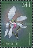 [Orchids of the World, Typ BDE]