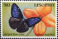 [Butterflies from Around the World, Typ BMA]