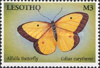 [Butterflies from Around the World, Typ BMB]