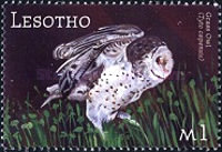 [Fauna of South Africa, Typ BOX]