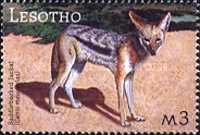 [Fauna of South Africa, Typ BOZ]