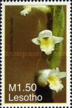 [Flowers - Orchids, type BXF]