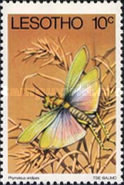[Insects, type IR]
