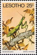 [Insects, type IT]