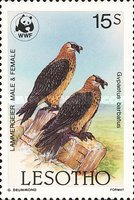 [Global Nature Conservation - Bearded Vulture, Typ TP]