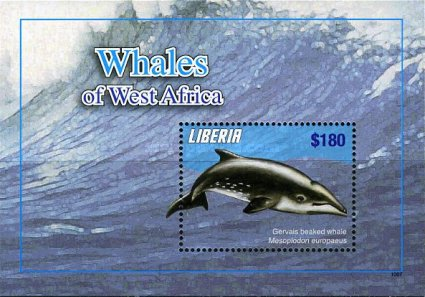 [Whales & Dolphins, type ]