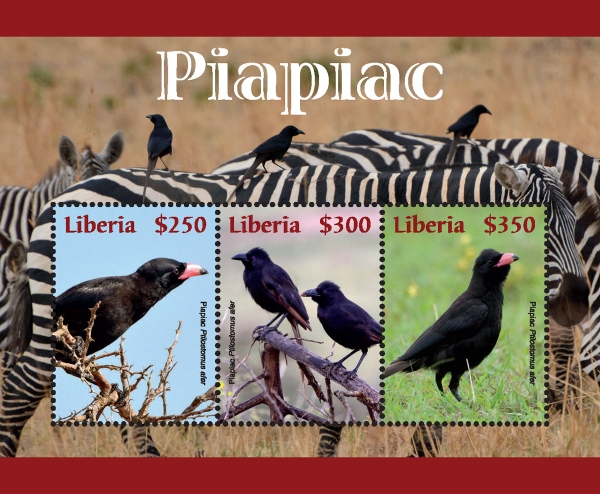 [Birds - Piapiac, type ]