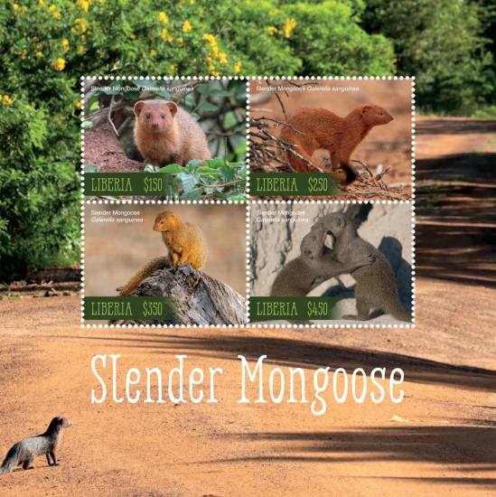 [Fauna - Slender Mongoose, type ]