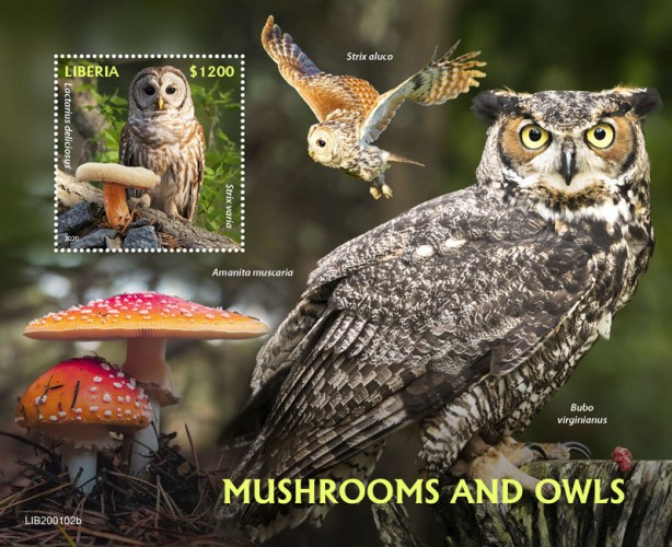[Birds - Mushrooms and Owls, type ]