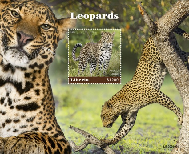 [Fauna - Leopards, Typ ]