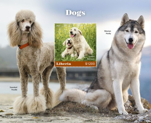[Fauna - Dogs - Canis familiaris, type ]