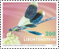 [Insects - Dragonflies, Typ BZE]