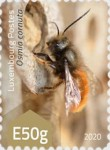[Insects - Wild Bees, type CAB]