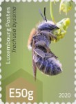 [Insects - Wild Bees, type CAC]