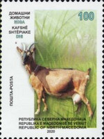 [Domestic Animals - Goat, Typ CEY]