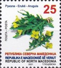 [Definitives - Vegetables, type CHA]
