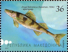 [Fish from the River Vardar, type OI]