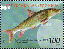 [Fish from the River Vardar, type OK]