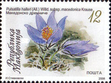 [Flora of Macedonia - Endemic Species, type QJ]