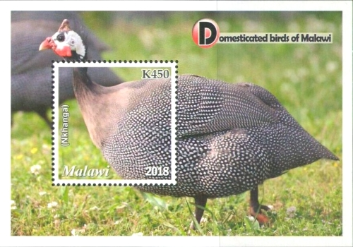 [Domesticated Birds of Malawi, Typ ]