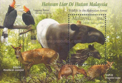 [Wildlife in the Malaysian Forest, Typ ]