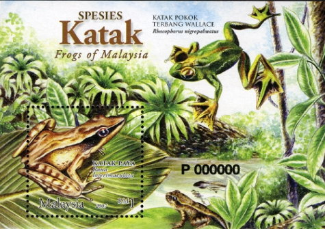 [Frogs of Malaysia, Typ ]