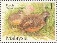 [Quails and Partridges, Typ AJS]