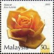 [Roses in Malaysia, Typ APD]