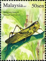 [Insects, Typ BAW]