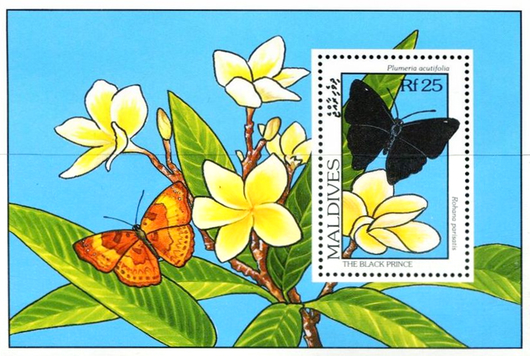[Butterflies and Flowers, Typ ]