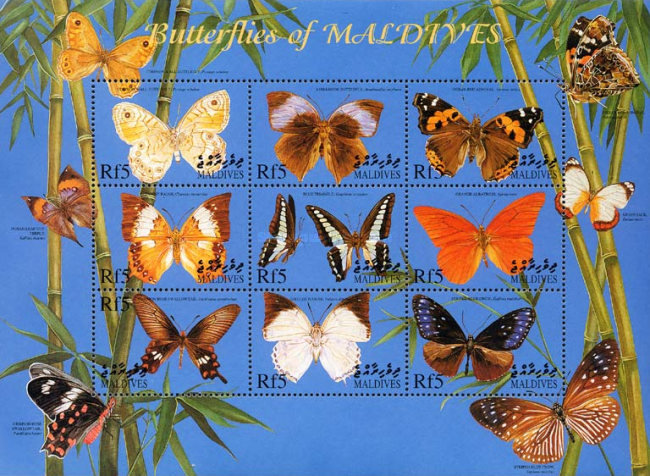 [Butterflies of the Maldives, type ]