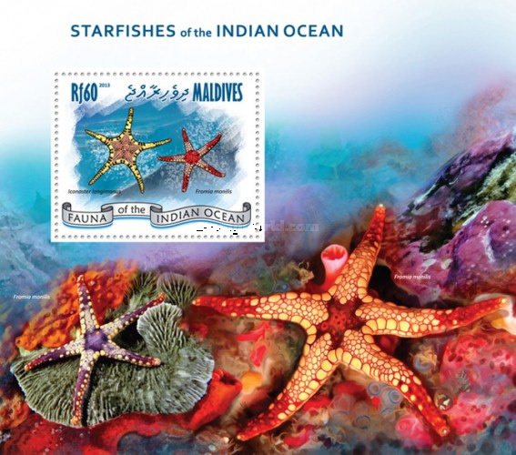 [Marine Life - Starfish of the Indian Ocean, Typ ]