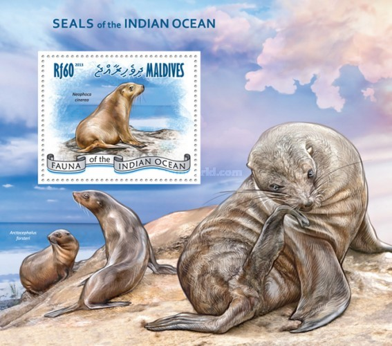 [Marine Life - Seals of the Indian Ocean, Typ ]