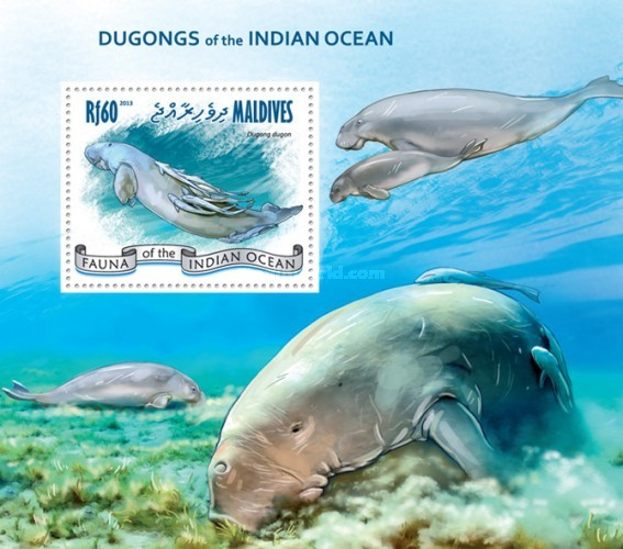 [Marine Life - Dugongs of the Indian Ocean, Typ ]