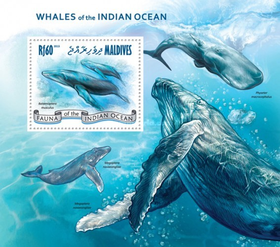 [Marine Life - Whales of the Indian Ocean, Typ ]